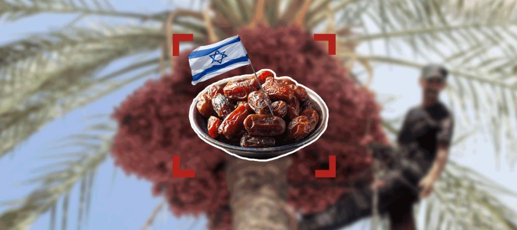 """زراعة التمور: """"إسرائيل"""" صنعت لنفسها الجذور"""