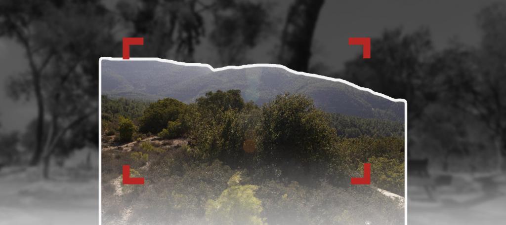 طو بشفاط: غرس الأشجار خدمة للاستيطان